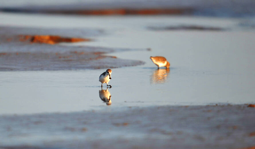 World Migratory Bird Day Observed In Pakistan
