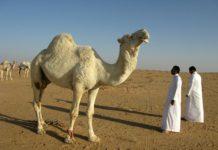 Pakistanis can now get Saudi visit visa on arrival